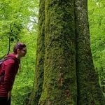 romanian forest hiking